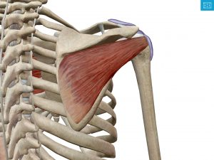 五十肩の改善