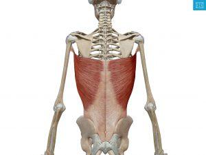 五十肩 筋肉