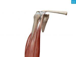 肩の痛み 検査 病気